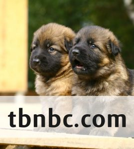puppies for sale near me - thbnbc.com